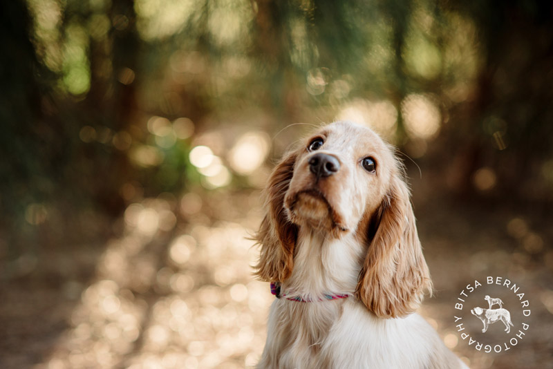 1 professional pet photography adelaide